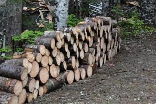 wood 11