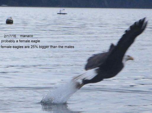 eagles-3