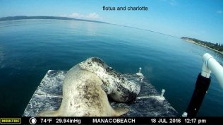 manaco-raft-11