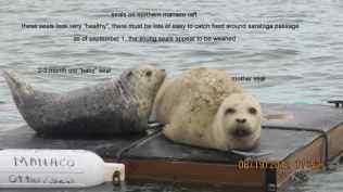 manaco-seal-raft-1
