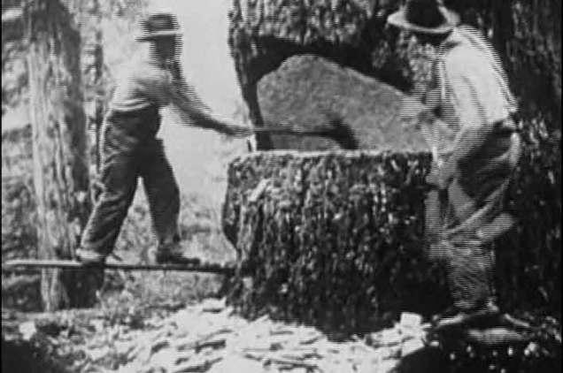 camano logging 2