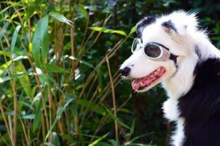 Fotografieren im Zoo: Hund im Zoo Hannover