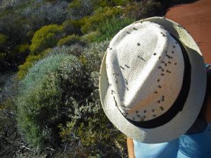 Roadtrip Australien Westküste Fliegen