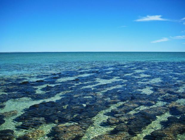 Roadtrip Australien Westküste Stromatolites