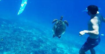 Aktivitäten Gili Air: Schnorcheln Gili Air: Meeresschildkröte