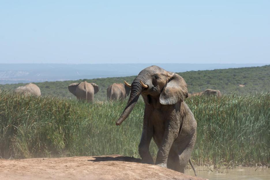 Addo Elephant Nationalpark Elefantenpark