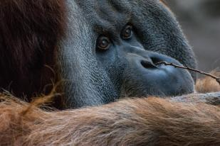 Leipzig Unternehmungen Orang Utan Zoo