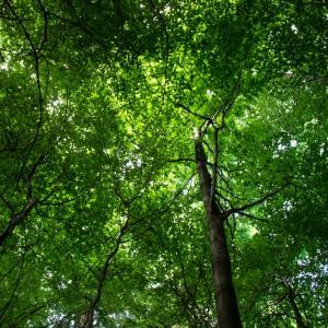 Übernachtung im Baumzelt