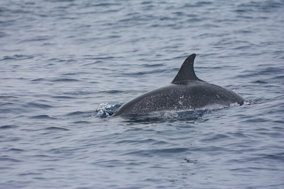 Nachhaltiges Whale Watching La Gomera