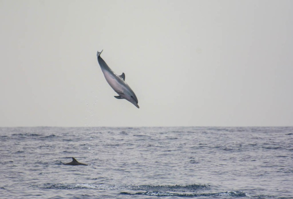 whale watching la gomera