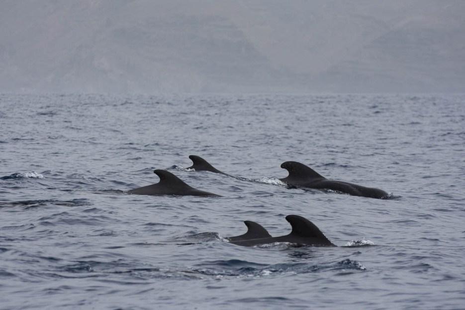 Sanftes Whale Watching La Gomera