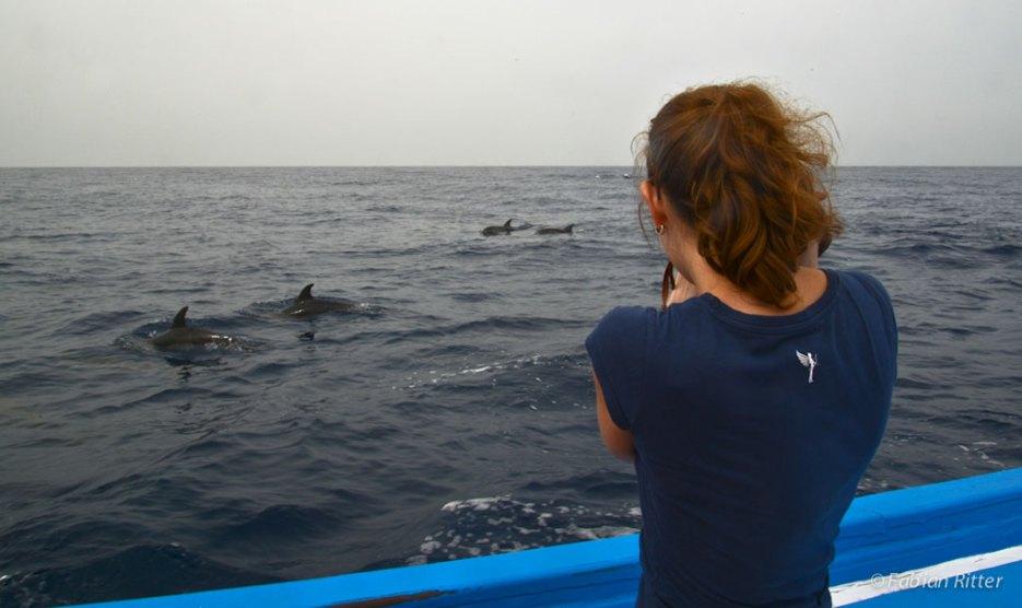 Wale beobachten vor La Gomera