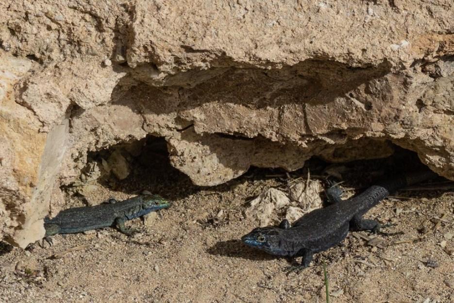 cabrera naturschutzinsel