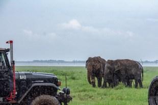 kaudulla safari elefanten jeep