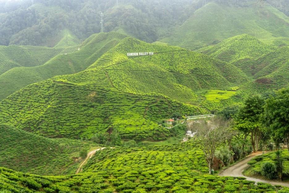 cameron highlands malaysia teeplantage