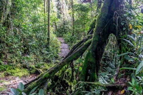 cameron highlands malaysia dschungel