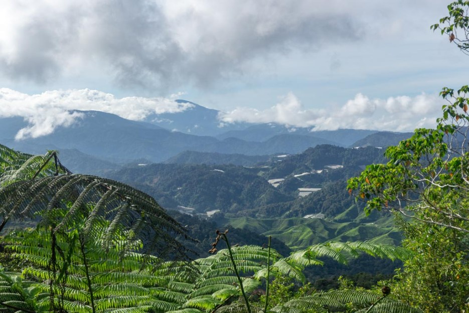 cameron highlands malaysia aussicht