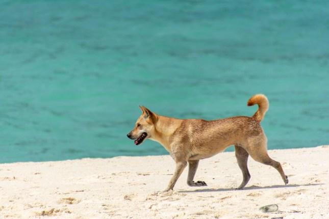 koh lipe beach hund