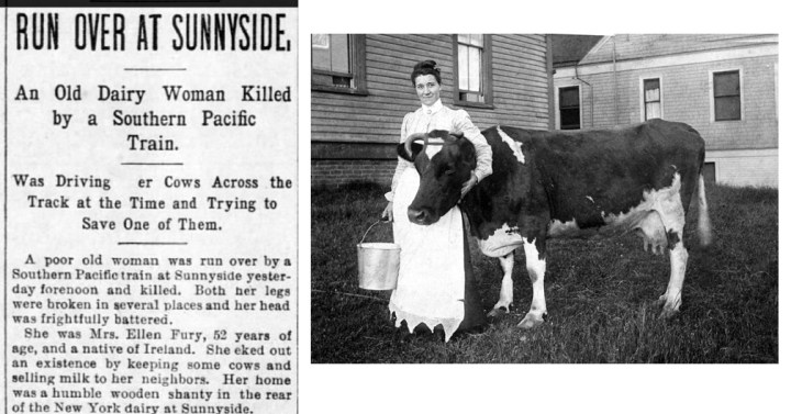 News article, SF Call 28 Jan 1896. This is not a photo of Ellen Furey; I chose it because this dairy woman is clearly fond of her cow, and Ellen died saving hers from death. Photo credit link at end.