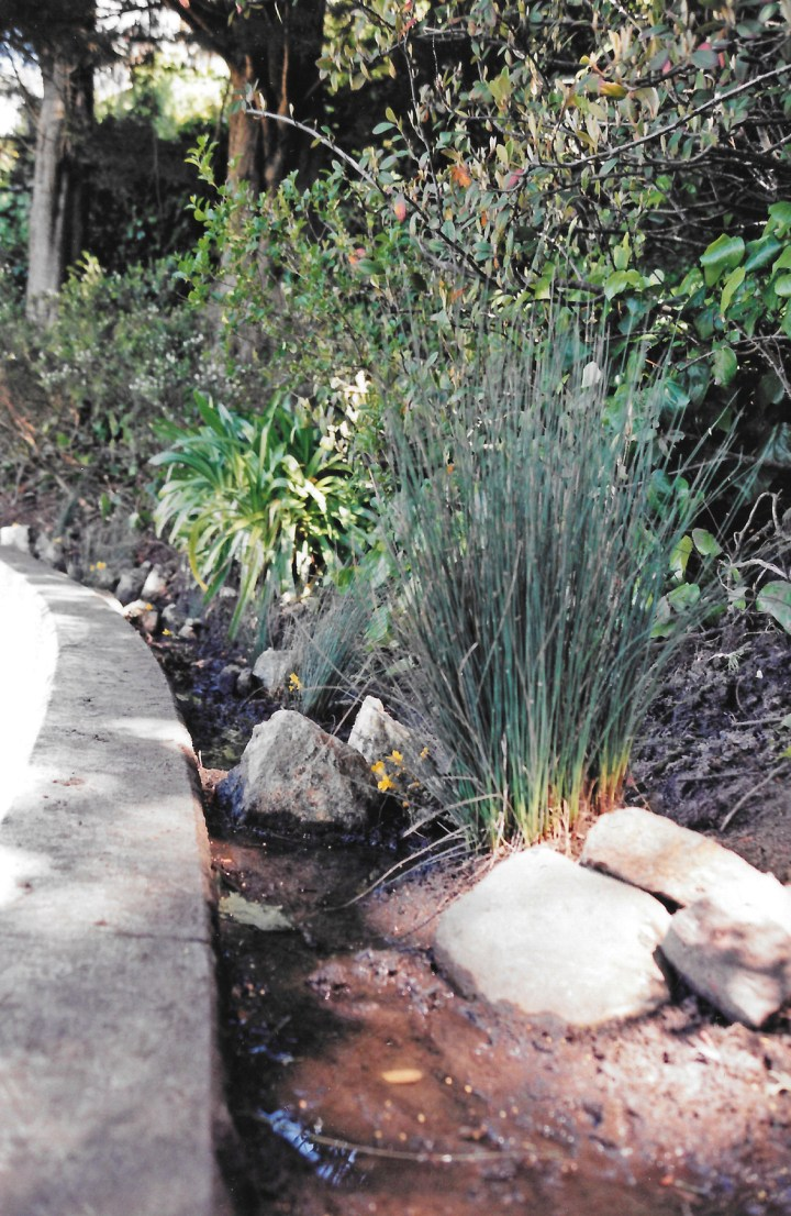 The riparian spring when it was newly landscaped, May 1999. Photo: Andrea O'Leary.