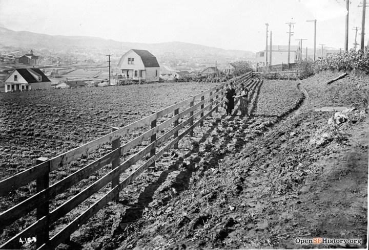 1917-VegGardens-SanJose-Diamond_wnp36.01633