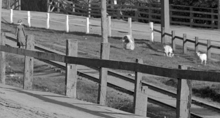 crop_goats__U02892
