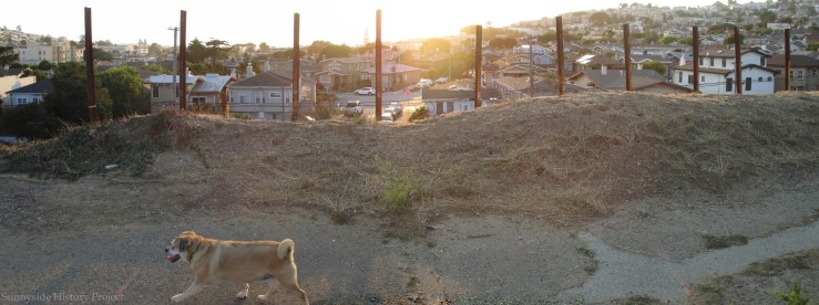Looking west on the west berm. Balboa Reservoir, Aug 2020. Sunnyside History Project. Photo: Amy O'Hair