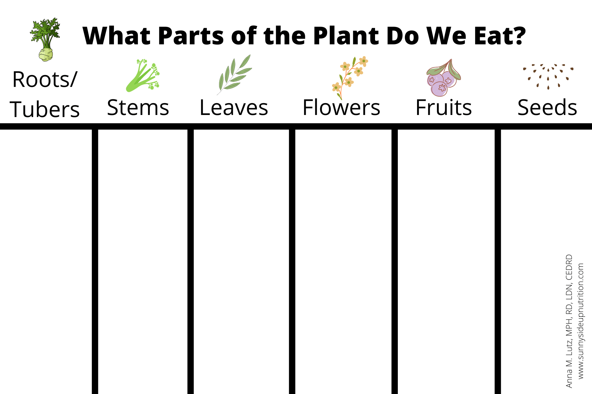 A School Nutrition Lesson The Edible Parts Of A Plant