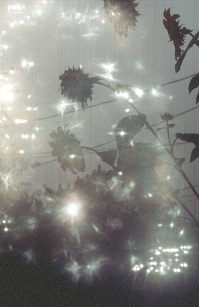SeeingStars