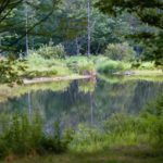 pond with reflections