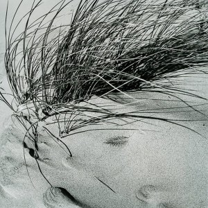 Beach Grass final