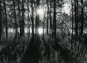 Sowerwine Sunrise