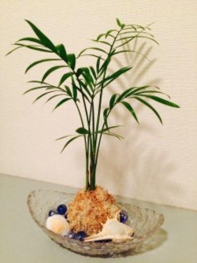 岡山市 女性専用エステの施術部屋に癒しの観葉植物のアレンジを飾りました。