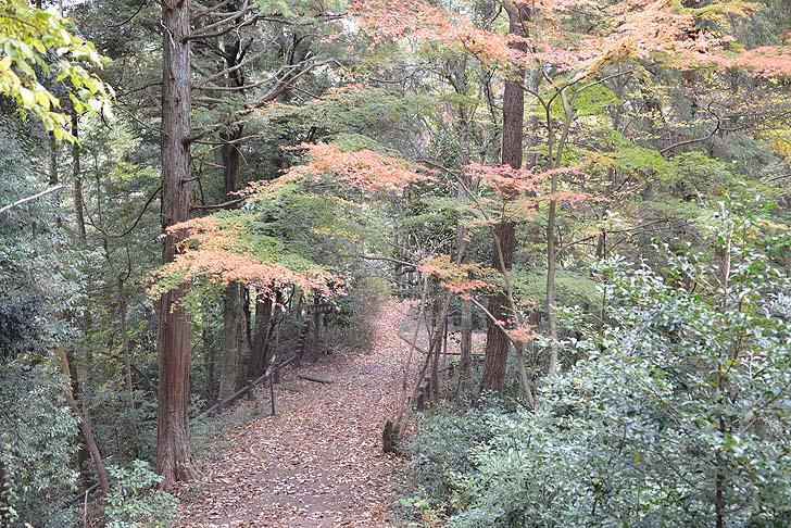 小倉公園の散策路