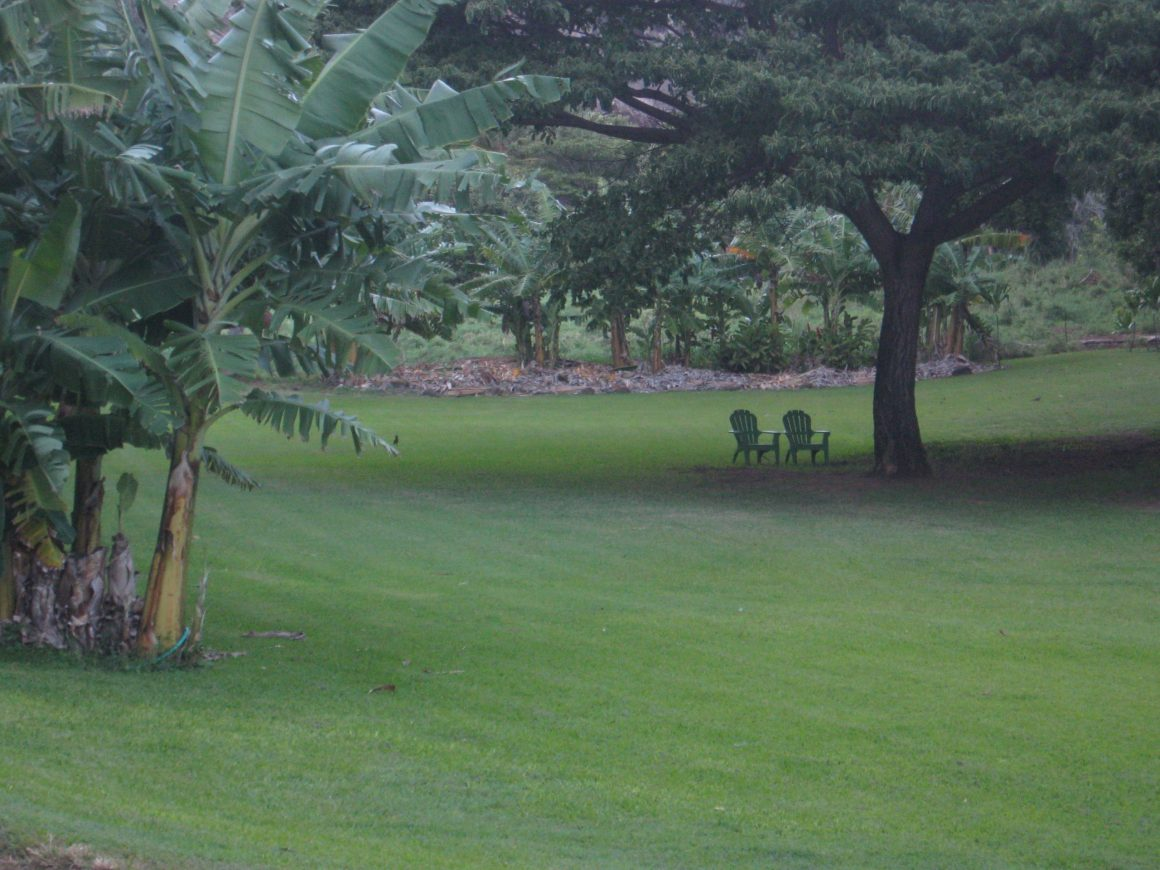 lawn (3)