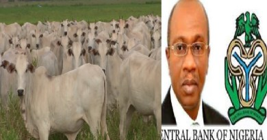 CBN to support herdsmen with funds to boost dairy production
