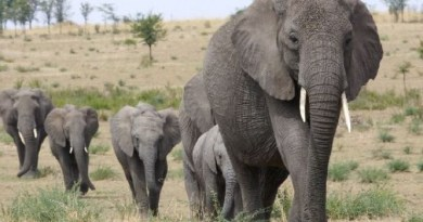200 elephants killed by drought in Zimbabwe – Official