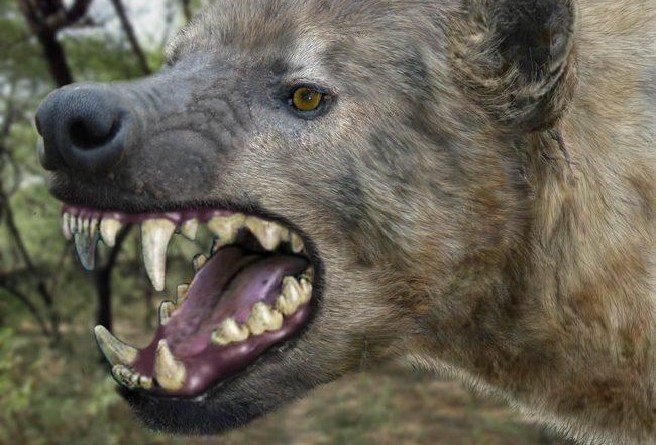 Dangerous! Giant hyena escapes from zoo in Imo State