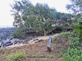 mangroves-at-edge