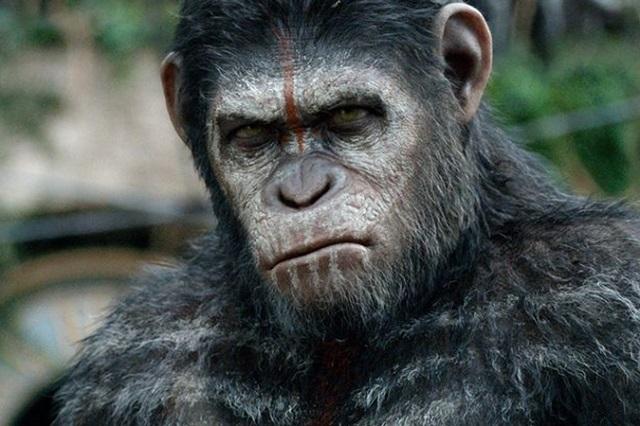 Dünyanın İlk İnsan Maymunu Çin'de Yaratıldı