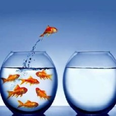 fish jumping - leadership principles - Fort Myers - Sunset Air and Home Services