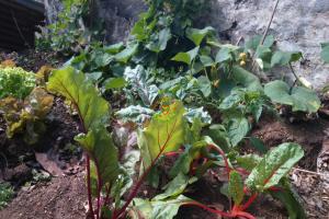 Backyard Gardening 3