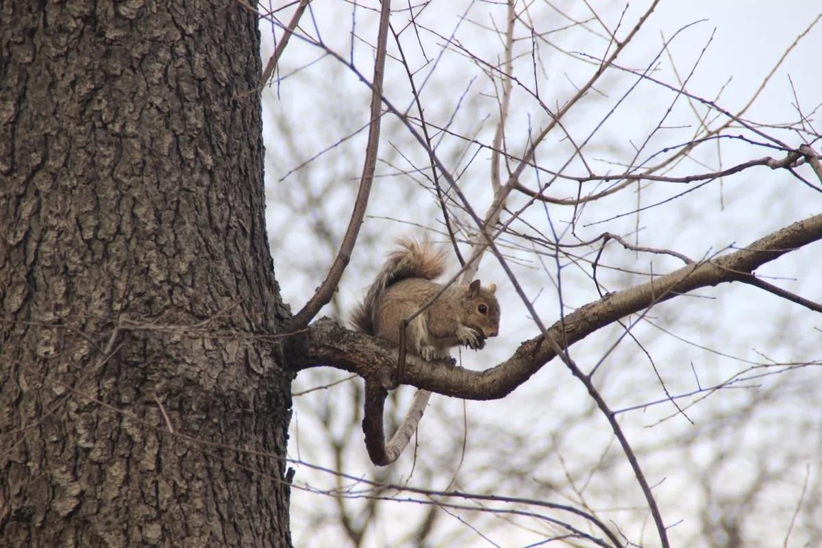 cp_squirrel_sm
