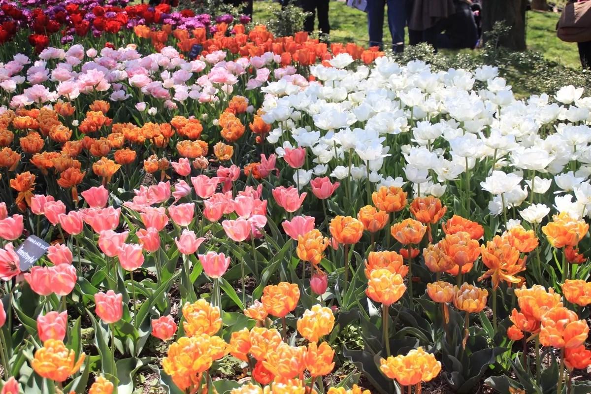sakura_bk_flowers2_sm