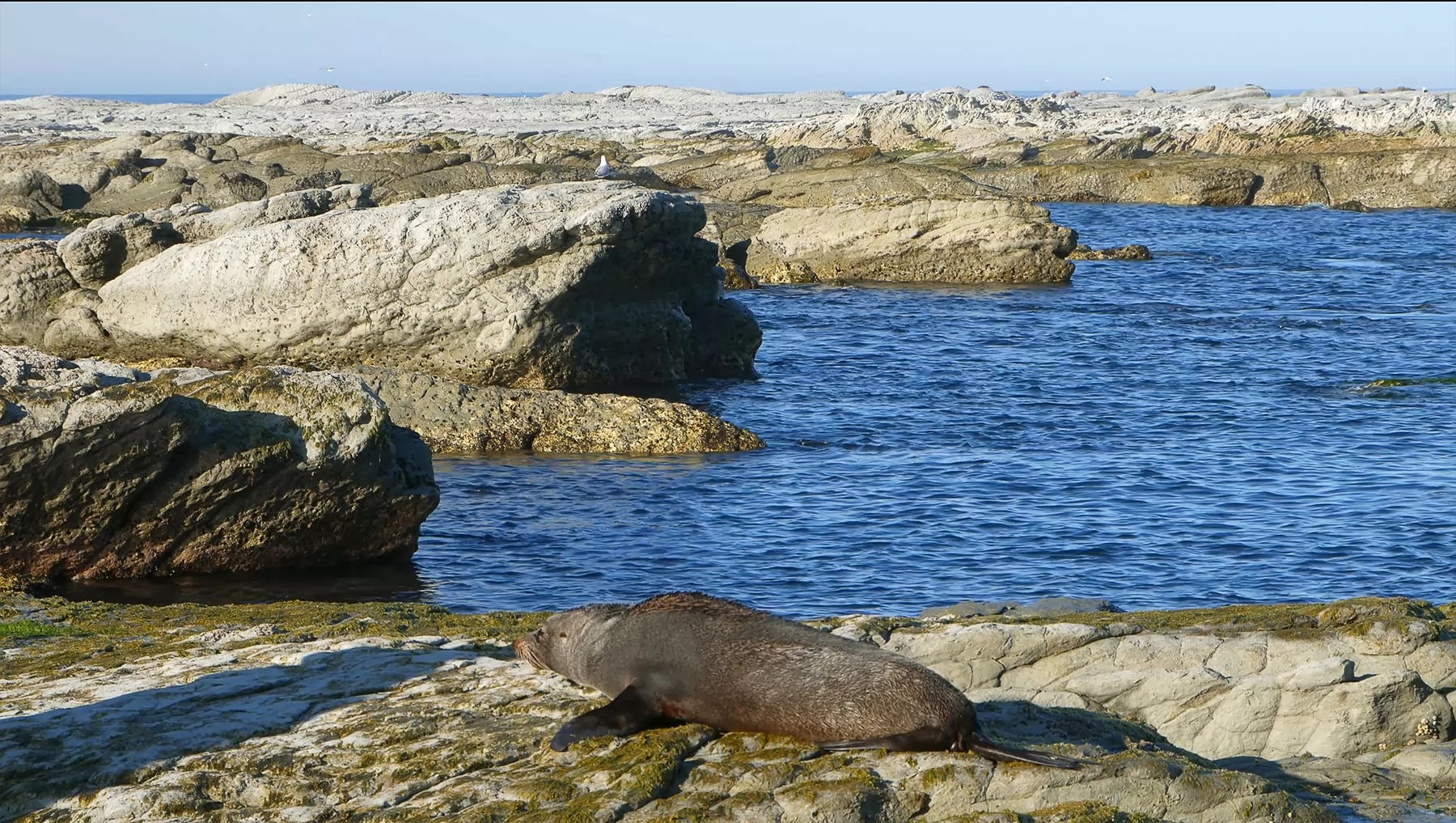 Seal having a rest on the rocks