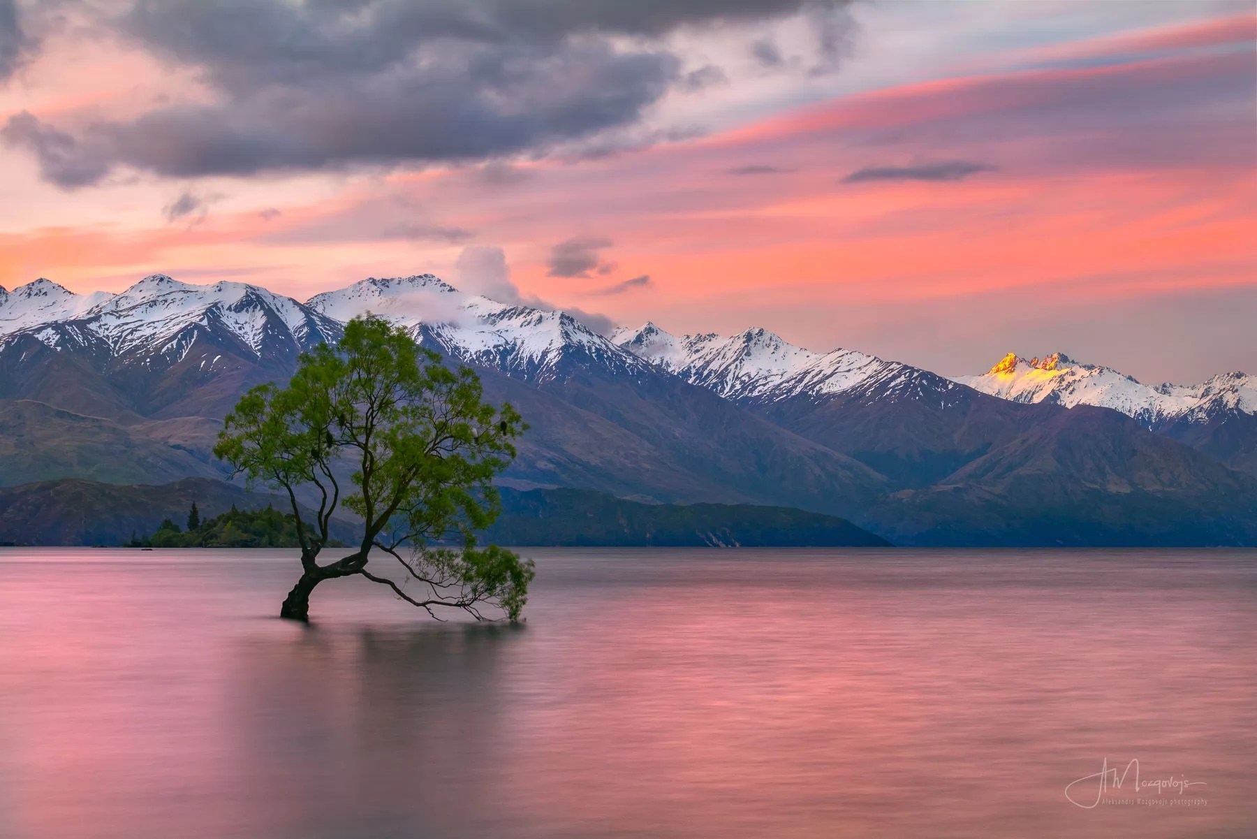 Wanaka Tree at sunset