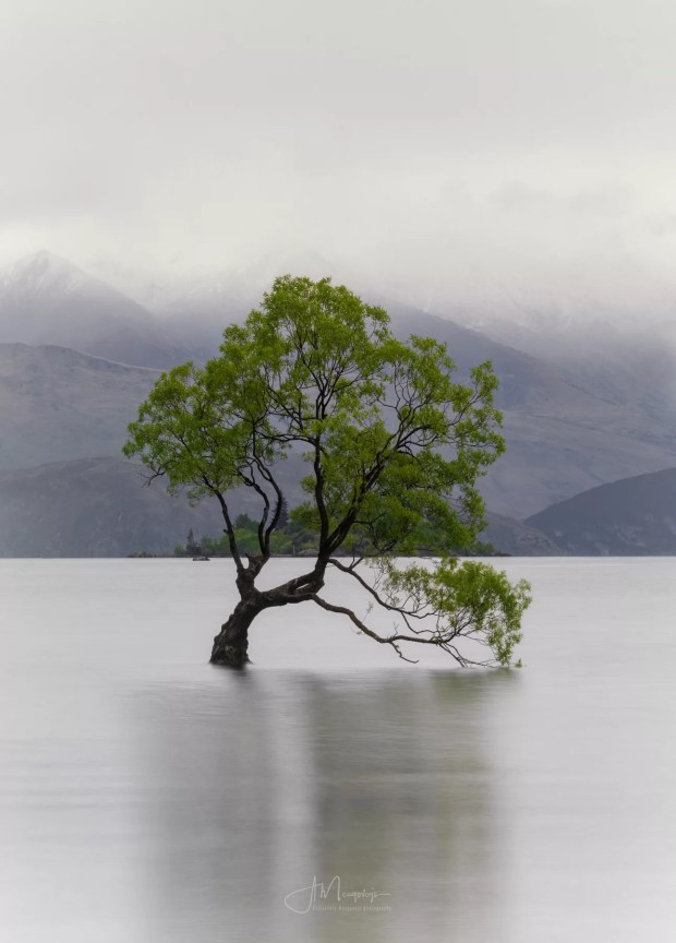 Wanaka Tree on a rainy morning, New Zealand