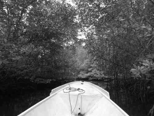 Mangrove Forest in Nusa Lembongan boat hire
