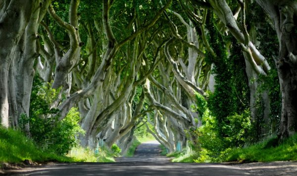 Mystery Hedges in Ireland