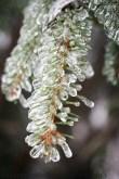 Ice On Needles